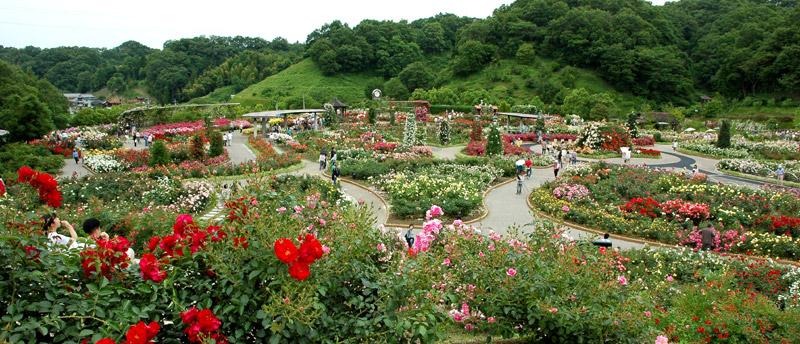 花フェスタ記念公園-世界のバラ園コーナークリックで拡大します'06/06/11