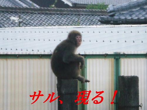 野生の猿が庭に\(◎o◎)/!