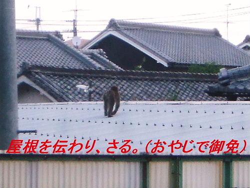屋根を使いサル^_^;