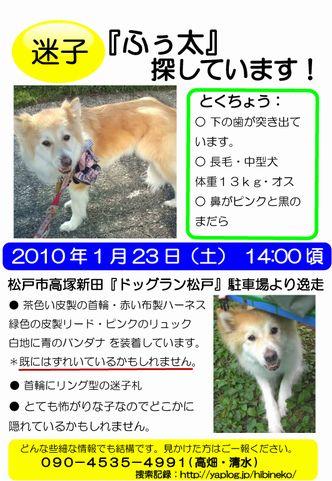 ふぅ迷子_2.jpg