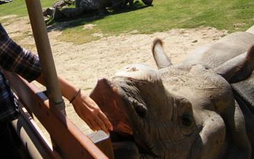08.15.11-Rhino.jpg