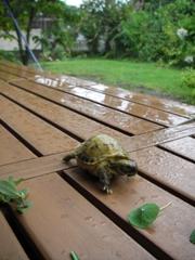 初めての雨