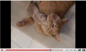 仲良し猫&ネズミ.jpg