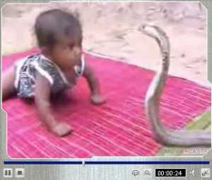 赤ちゃんVSコブラ.jpg