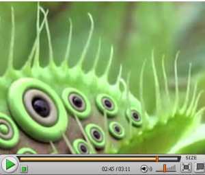 不思議な植物2.jpg