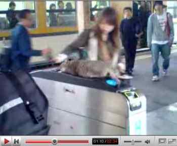 駅猫.jpg