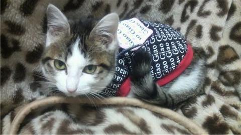 服を着た猫(横・カメラ目線).jpg