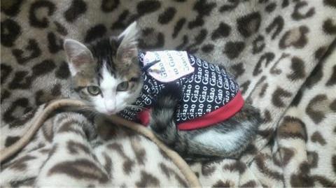 服を着た猫(横・カメラ目線2).jpg