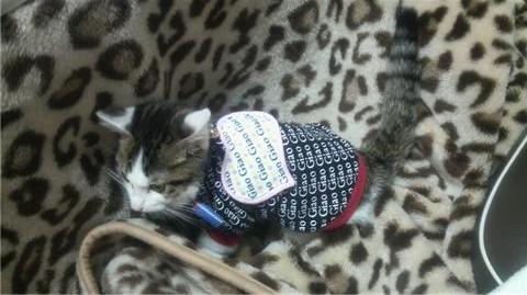 服を着た猫(横).jpg