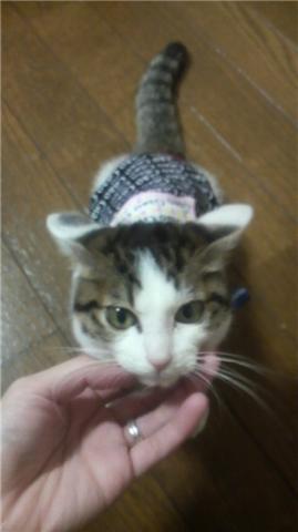 服を着た猫(正面).jpg