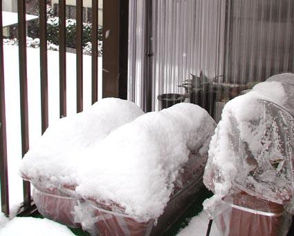 ベランダの雪景色