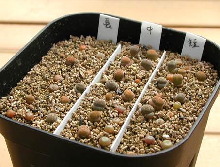 リトの植替え実験2