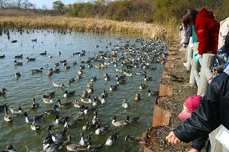 渡り鳥の観察