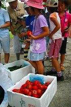 トマトとキュウリ1