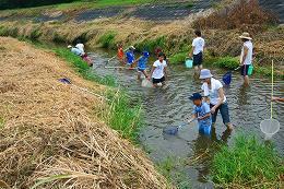 田尻川で魚とり2