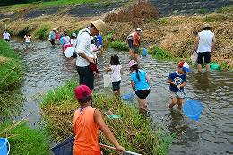 田尻川で魚とり3