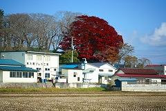 羽黒山 昨年11月21日撮影