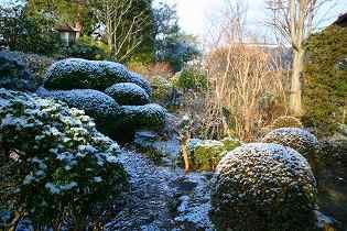 うっすらと雪化粧した庭