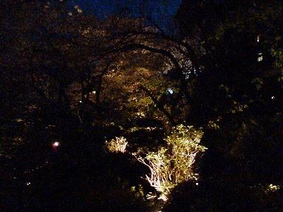 桜さじき席