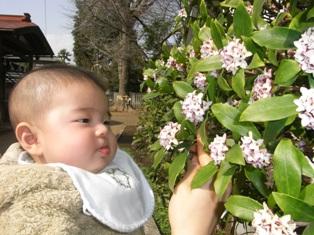 春の花を愛でる駿さま.JPG