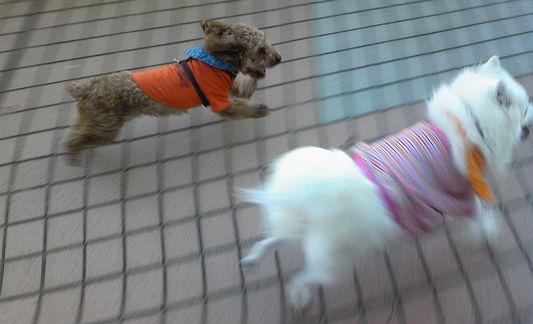 2009/01/17お散歩1
