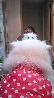 2008/11/23わんこ1