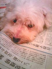 2008/08/16わんこ1