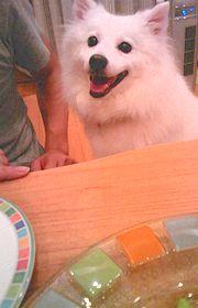 2008/08/16わんこ2
