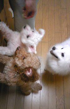 2008/09/20わんこ1