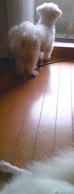 2008/08/23わんこ2