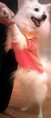 2009/01/13わんこ3