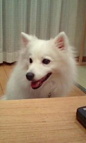 2008/06/07わんこ1