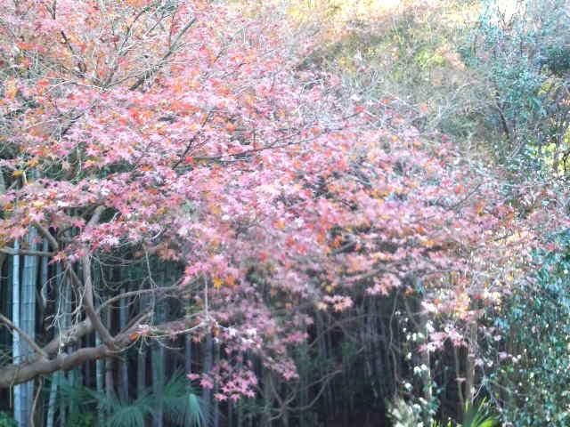 平野の森・紅葉
