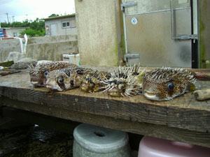 小浜島 細崎漁港