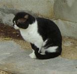 小浜島 細崎漁港の猫