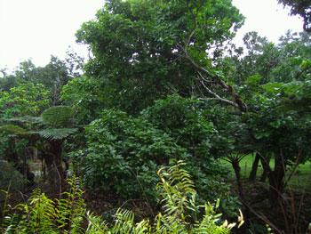 西表島 パイヌマヤ・リゾート