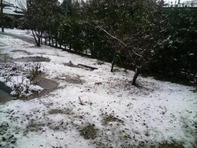 雪景色 2007.12.4.JPG