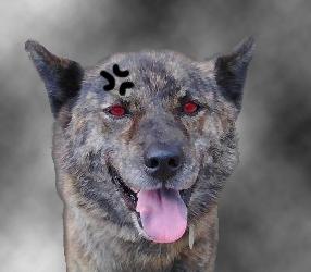 甲斐犬.jpg