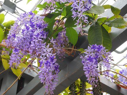 淡路の花2