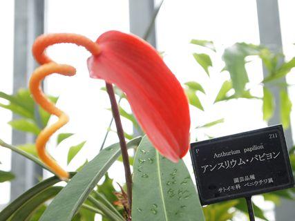 淡路の花3