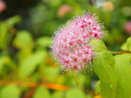 淡路の花6