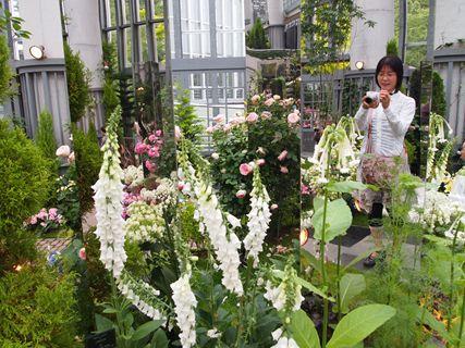 淡路の花7