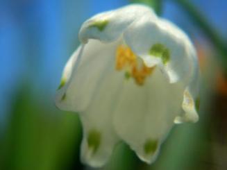 今日撮った花の写真(2010.3.11) 3