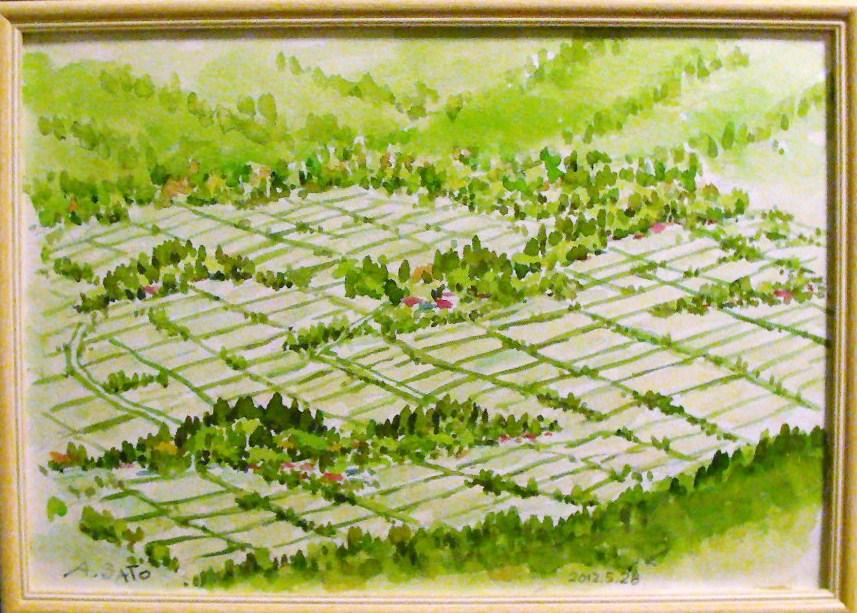 水田風景 阿蘇盆地