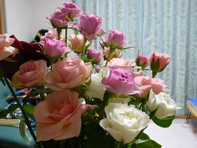 ネムさんからいただいたバラ
