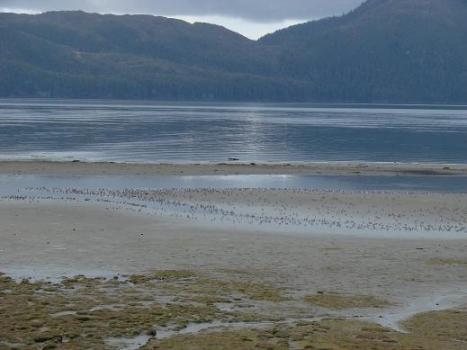 Let's look shore birds
