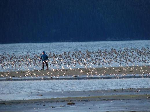 Shore birds with a boy