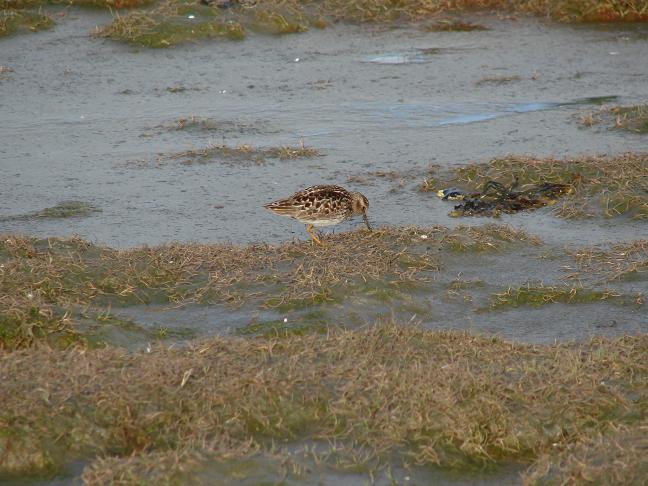 A shore bird