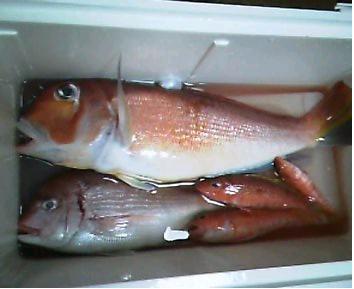 200602甘鯛.JPG