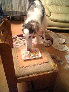 ノイン1歳バースデーパンナコッタを食べる